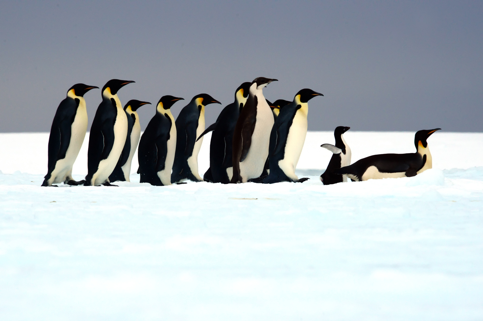 """Antartica – """"A Journey to the Ends of the Sailing World"""""""