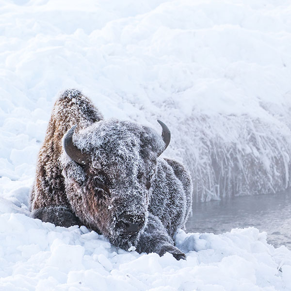 Yellowstone National Park Winter with Raul Touzon